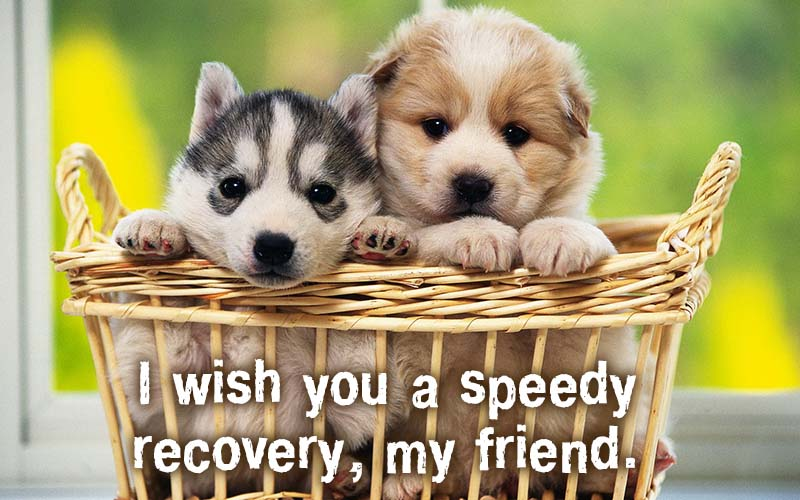 Ecards I wish you a speedy recovery