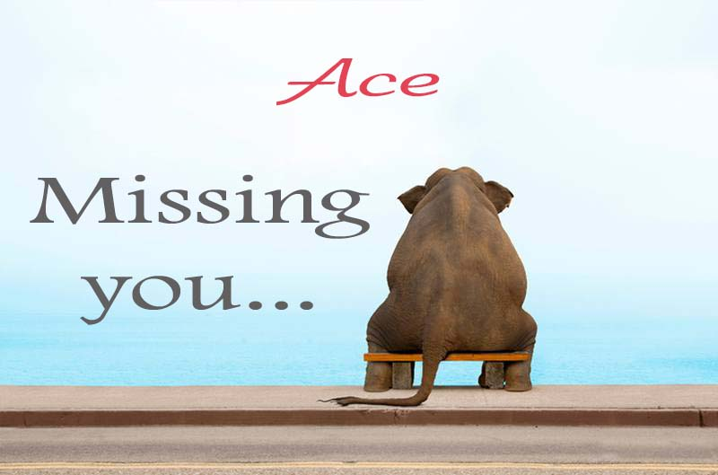 Cards Ace Missing you