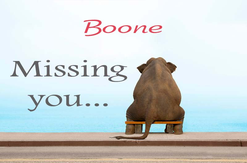 Cards Boone Missing you