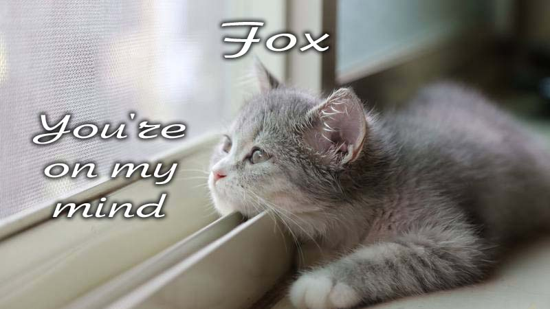Ecards Missing you so much Fox