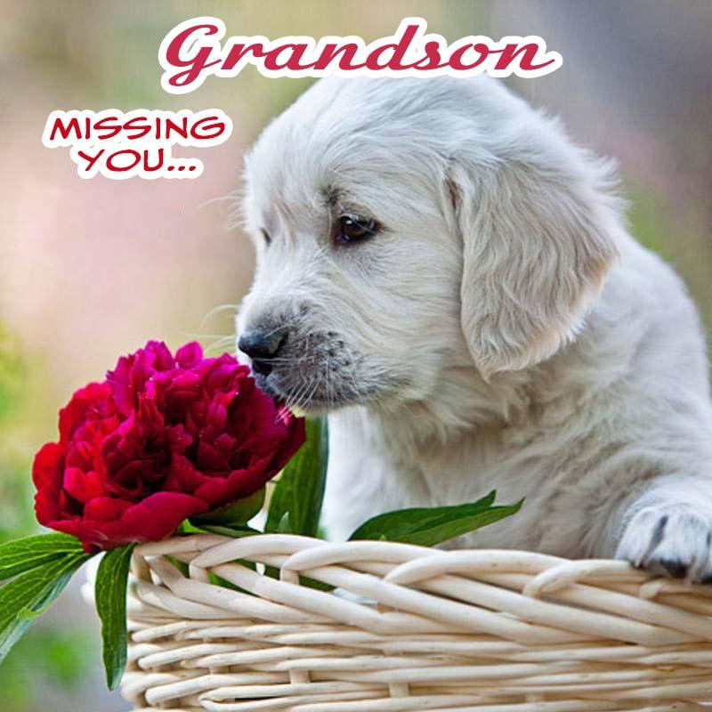Cards Grandson Missing you